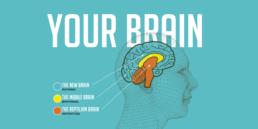 3 cerebros